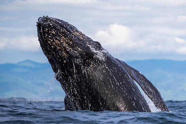 Marine Mammal Workshop & Excursion